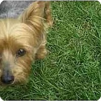 Adopt A Pet :: Jeeter..The Cool Dog - Commerce TWP, MI