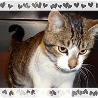 Adopt A Pet :: Sara Bee - Mobile, AL