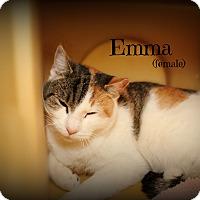 Adopt A Pet :: Emma - Springfield, PA
