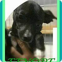 Adopt A Pet :: EEYORE - Halifax, NS