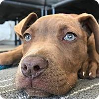 Adopt A Pet :: JB Ana - San Diego, CA