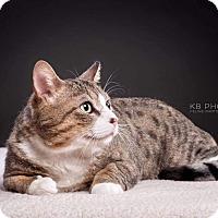 Adopt A Pet :: Damon - Knoxville, TN