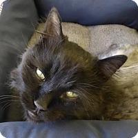 Adopt A Pet :: Spike - Westminster, CO