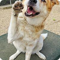 Adopt A Pet :: Betsy - West Babylon, NY