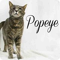Adopt A Pet :: *POPEYE - Sugar Land, TX