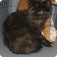 Adopt A Pet :: Rosebud - Dallas, TX