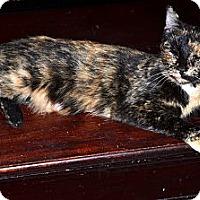 Adopt A Pet :: Bri - Xenia, OH