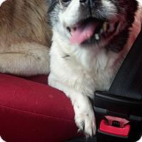 Adopt A Pet :: Angie - Brooksville, FL