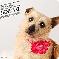 Adopt A Pet :: Jenny-pending adoption - Omaha, NE