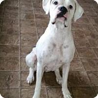 Adopt A Pet :: Scarlet (courtesy post) - Houston, TX
