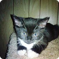 Adopt A Pet :: Tippy - Kirkwood, DE
