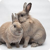 Adopt A Pet :: Chrysanthe & Artemisia - Los Angeles, CA
