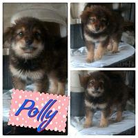 Adopt A Pet :: Polly - LAKEWOOD, CA