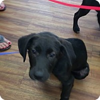 Adopt A Pet :: Olivia - Glen St Mary, FL