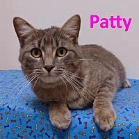 Adopt A Pet :: Patty - Mountain View, AR