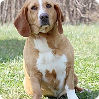 Adopt A Pet :: Frederika - Waldorf, MD