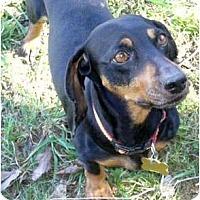 Adopt A Pet :: Portia - San Jose, CA