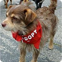 Adopt A Pet :: SQUEAK - Los Angeles, CA