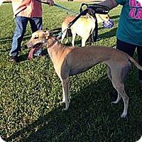 Adopt A Pet :: Diva - Vidor, TX