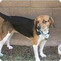 Adopt A Pet :: Alexandra - Phoenix, AZ