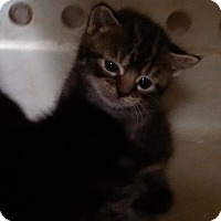 Adopt A Pet :: Rebekah Boone - Willington, CT