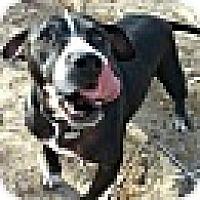 Adopt A Pet :: SUKI - Valley Village, CA