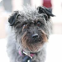 Adopt A Pet :: Faith - Canoga Park, CA