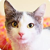 Adopt A Pet :: Denver - Xenia, OH