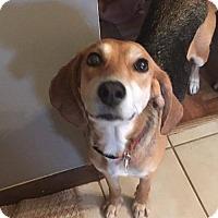 Adopt A Pet :: Jezebel - Cool Ridge, WV