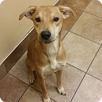 Adopt A Pet :: Sur *Petsmart GB* - Appleton, WI