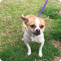 Adopt A Pet :: Mildred - Poughkeepsie, NY
