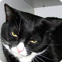 Adopt A Pet :: Julius - Kalamazoo, MI