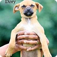 Adopt A Pet :: Nemo and Dory - Southbury, CT