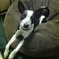 Adopt A Pet :: Adorable Jax - Woodland Hills, CA