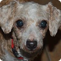 Adopt A Pet :: Freda - Prole, IA