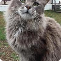 Adopt A Pet :: Princeton - Wichita, KS