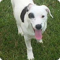 Adopt A Pet :: Pumpkin - Killian, LA