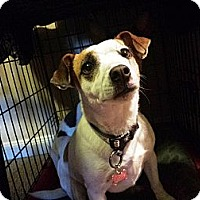 Adopt A Pet :: R.A.I.N RESCUE NEEDS YOU!!! - Chandler, AZ