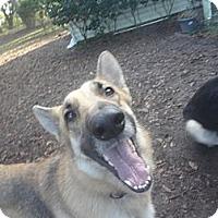 Adopt A Pet :: Patsy - Green Cove Springs, FL