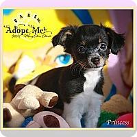 Adopt A Pet :: Princess - Albany, NY