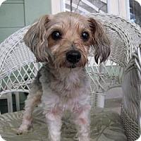 Adopt A Pet :: Jilly - Leesburg, FL