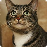 Adopt A Pet :: Anastasia - Canoga Park, CA