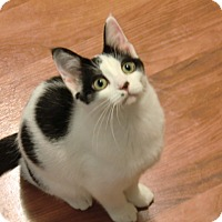 Adopt A Pet :: Cowgirl - Green Bay, WI