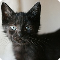 Adopt A Pet :: Buckwheat - Canoga Park, CA