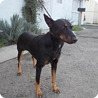 Adopt A Pet :: Sunnee - Bakersfield, CA