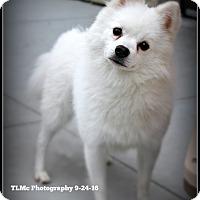 Adopt A Pet :: Rubin - Elmhurst, IL