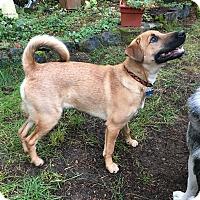Adopt A Pet :: Solara - Gig Harbor, WA