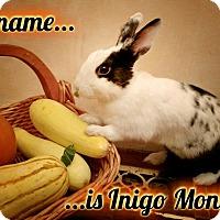 Adopt A Pet :: Inigo Montoya - Elizabethtown, KY