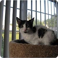 Adopt A Pet :: Uri - Catasauqua, PA