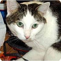 Adopt A Pet :: Tigger - Scottsdale, AZ